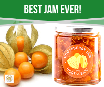 "Authentic Cape Gooseberry Jam – ""Best Jam Ever!"""